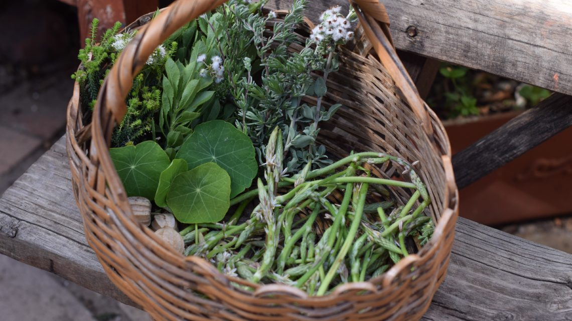 FORAGING WITH VELD AND SEA