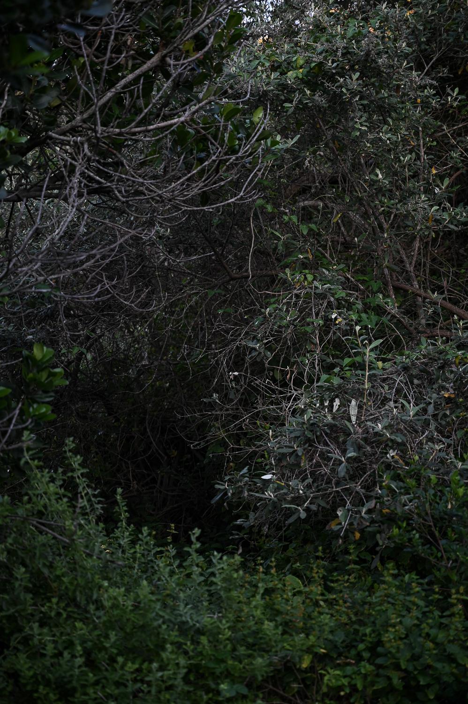 THE KLEIN KAROO TO NOETZIE – A GARDEN ROUTE ROADTRIP